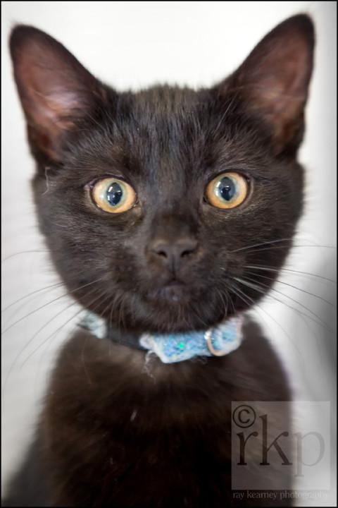 Black kitten staring at camera