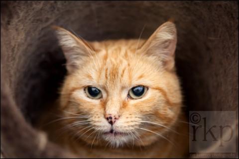 Ginger cat in tube