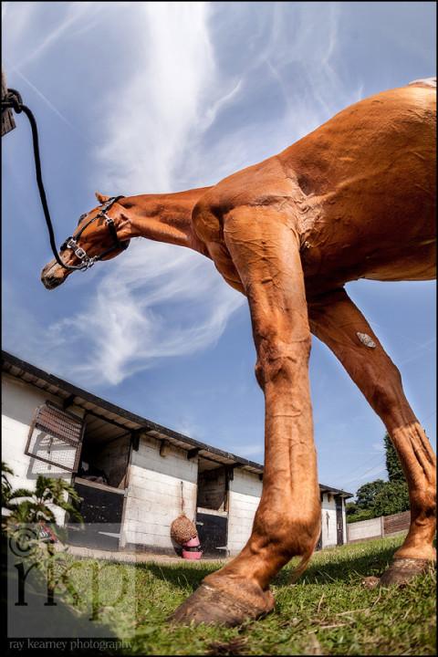 Ginger stallion's long legs